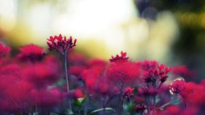 Dreaming red by praveen3d