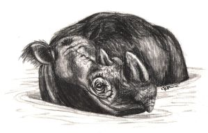 Sumatran Rhino Charcoal by JenDragon