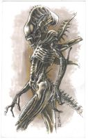 Alien sketch by cuccadesign
