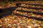 Leaves on Steps by NorthOne