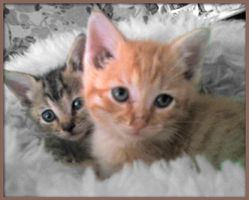 Kittens by Ciarra