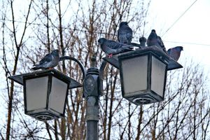 Pigeons by MargoHell