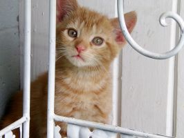 Toby - The Kitten by straightjacketphotos