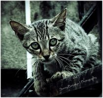 Cat3 by sunnybarjatya