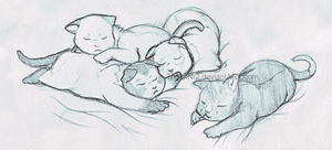 CanaCats Kittens -close up- by TripletNr2