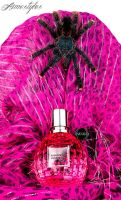 Birdspider vs Viktor and Rolf by RomanGrandkeBerlin