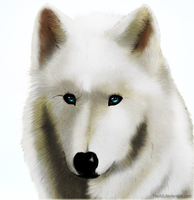 Realistic fur practice by Yechii