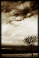 Solitary Tree by scuroluce