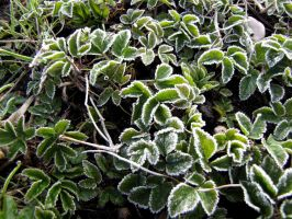 Spring Frost II by Baltagalvis