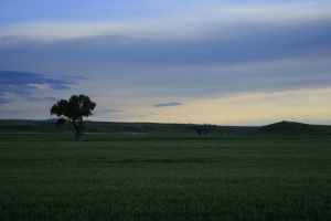 lone tree stock by Aphoticbeauty