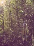 bamboo forest by ocean-dance