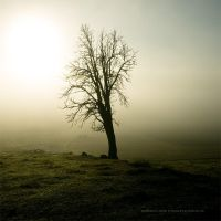 The Old Tree by Stridsberg