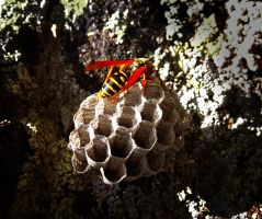 Wasp - Honeycomb by tepithebest