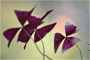 purple-wallpaper-autumn by sonafoitova