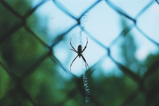 Steel-enclosed spider. by jsut