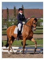 Dressage by LovLus