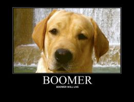 Boomer will live... by LJPhil