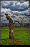Almost dead tree by deaconfrost78