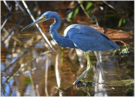 Florida Wetlands Birds 78 by Skip1967