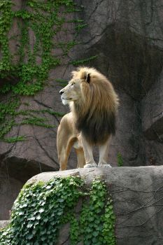 Portrait Of A King by Aeires