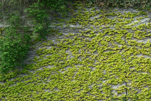 Green wall by GuelayG