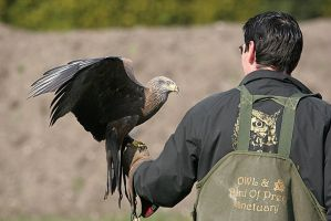 Black Kite and his handler by slowriot