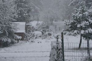 December Snow 2008 14 by Ozzyhelter