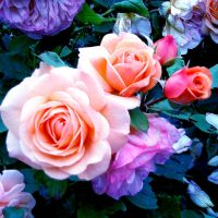 The Fantastic World of Roses by Zebrapluschi