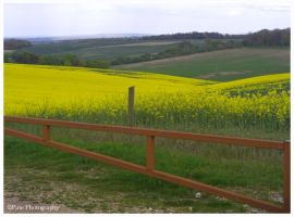 Yellow Meadow by i4Photography