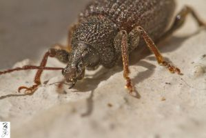 The Root of Weevil by The-Dude-L-Bug