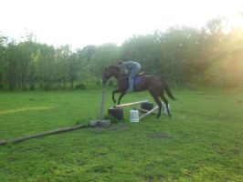 and my english horse by rhinebeck