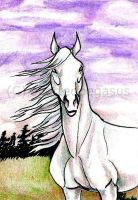 White horse ACEO by SpottedPegasus