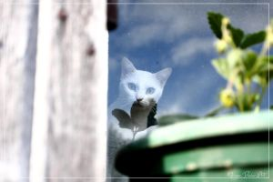 Cat In The Sky by DeFutura