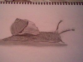 Snail drawing by an 11 year old by slashclaws1