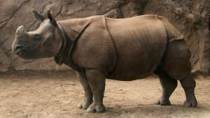 Oregon 2009 - Rhino by DarlingMionette