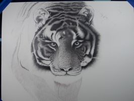 Tiger Progess...... Almost Done!!!!! by whsprluv69