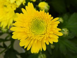 Yellow Flower by YesimMisey123
