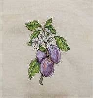 The Regal Plum by Mattsma