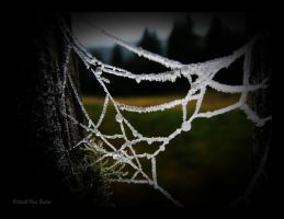 Frozen Web by YingSiYang
