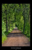 All the Roads Lead Back to You by patu-