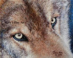 """Wolf Eyes"" - Realism by robybaer"