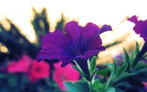 2-13 Morning Flowers 01 by harimauputeh