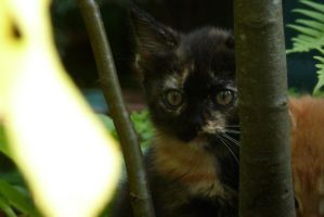 Introducing : A mysterious kitten. by Odessa-Himijo