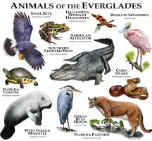 Animals of the Florida Everglades by rogerdhall