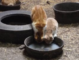 Two Cats Drinking Milk.. by Marskitty