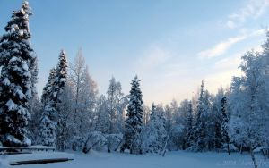 NATURE'S WINTER BLUE WOODS by 1arcticfox
