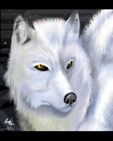White Wolf by killerswing17