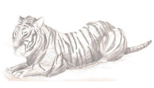 Tiger Study 2 by GoWaterTribe