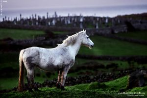 Ireland 03 by BlackdoG-MT