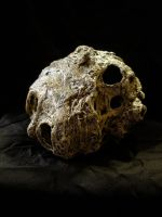 mummified head of jack 1 by FraterOrion
